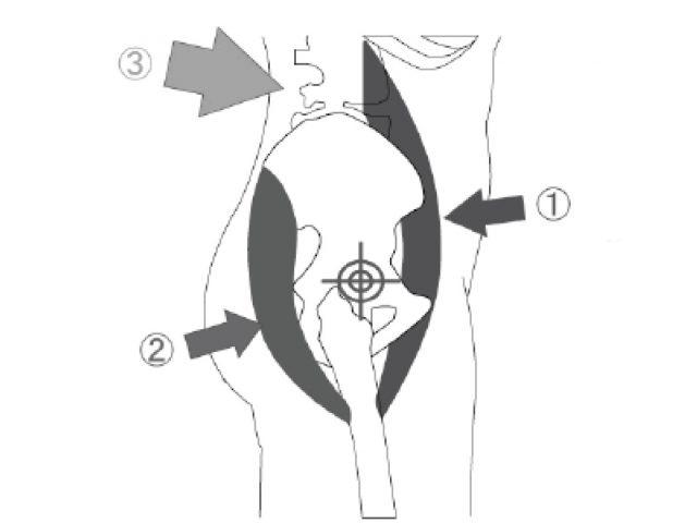 立った時の骨盤は起きた状態。重力に従って骨盤まわりの筋肉が下に引っ張られるため骨盤が起きます。